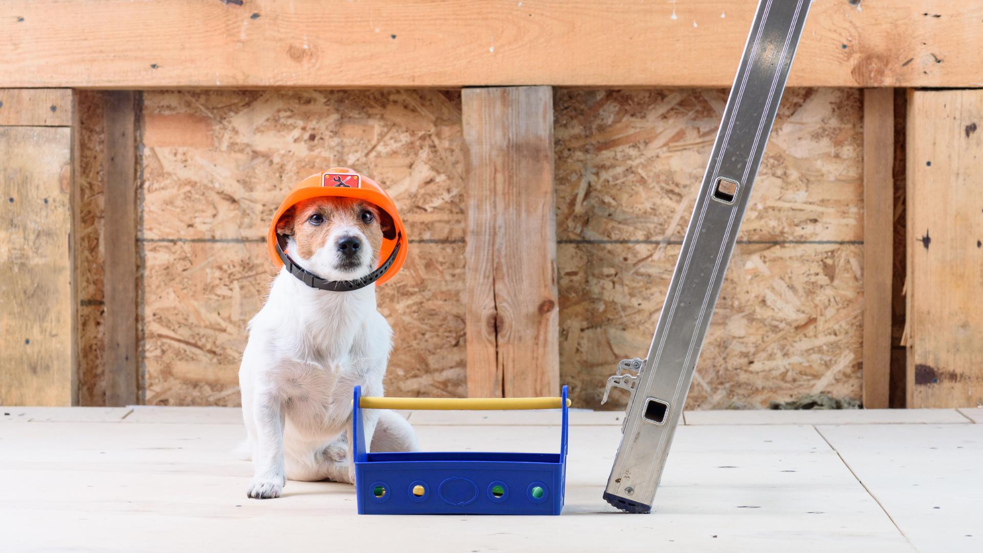 dog-dressed-as-builder