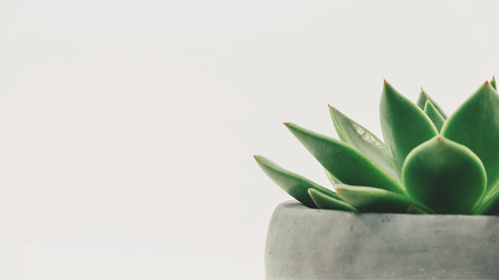 white-background-green-plant